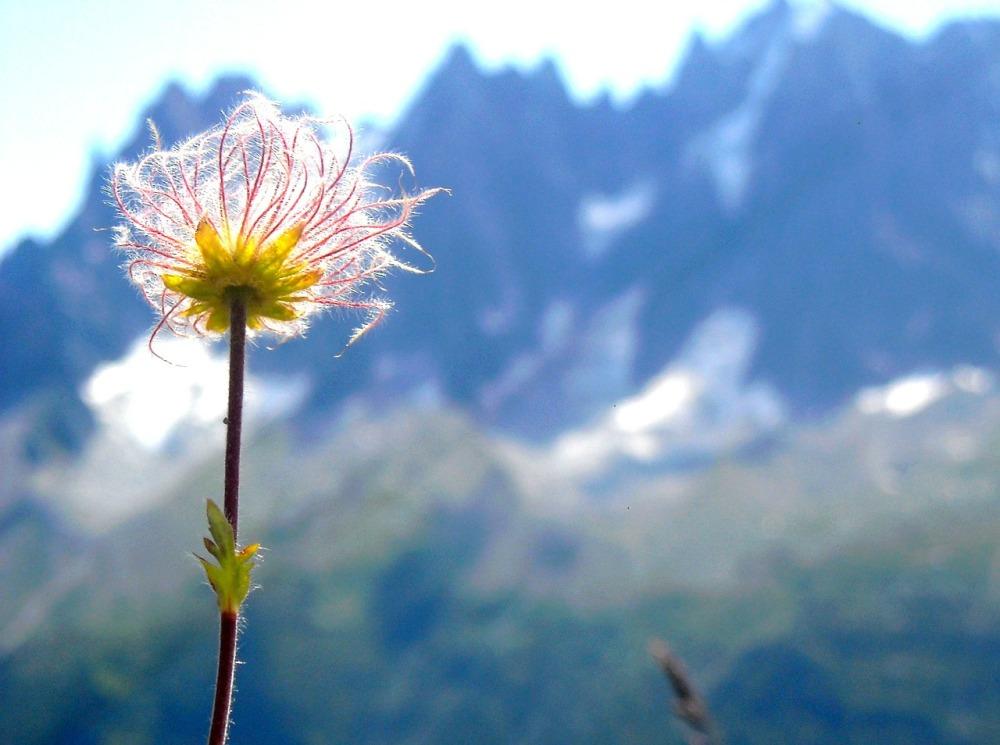 flower-565986_1280