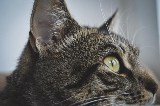 erica-nilsson-cat